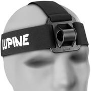 Lupine D197